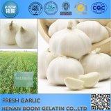 中国の新しい穀物の新しいニンニク2016-2017年