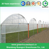 Serre chaude en plastique d'envergure multi d'agriculture pour des légumes