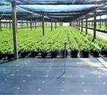 Matérias têxteis tecidas PP da tampa à terra/horticultura/fornecedor profissional tela da paisagem em China