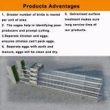 Горячее гальванизированное оборудование клетки слоя цыпленка оборудования цыплятины международного стандарта