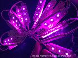 최신 판매 공장 가격 5050 정연한 LED 단위