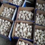 Поставщик чеснока в Китае (чеснок нормального белого garlic&pure белый)