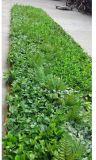 녹색 벽 구 Jc112100VW002의 인공적인 플랜트 그리고 꽃의 고품질