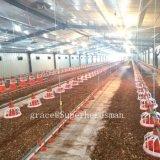 Matériel moderne de ferme avicole avec la construction en acier de modèle de cloche de volaille