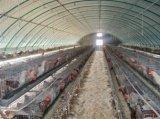 Il pollame d'acciaio galvanizzato anticorrosivo alloggia/Camera di pollo