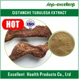 Poudre d'extrait de Cistanches Cistanche de herba