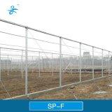 Réseau d'empêchement d'insecte de SPF pour agricole