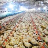 Оборудование фермы поголовья цыпленка полного комплекта