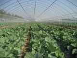 농업 사용을%s 온실 /Tunnel 온실 필름 온실 /Economical 가장 싼 상업적인 온실