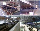 Installation de fabrication d'or, matériel de processus de minerai d'or, or extrayant le matériel
