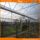 Planting를 위한 아치 Structure 다중 Span Film Greenhouse