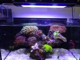 2017 das beste Licht des Farben-Spektrum-216W 115cm Marineder fisch-LED