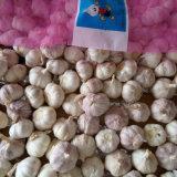 Aglio bianco fresco cinese nel sacchetto della maglia 10kg