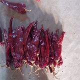 Paprika-Hülsen