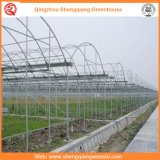 Agriculture / Commercial PE Film tunnel serres pour fraises / roses