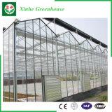 De Serre van de Landbouw van het glas voor Tomaten/Bloemen