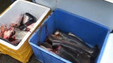 Fisch-Hauptausschnitt-Maschinen-Fisch-entfernende Hauptmaschine