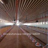 Оборудование птицефермы высокого качества автоматическое с одним обслуживанием стопа и свободно конструирует