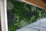 Alta qualità Artificial Plants e Flowers Green Wall Gu-Wall05182705