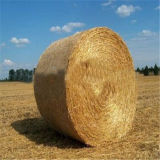 Обруч сети Bale для земледелия и фермы