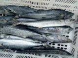 Fornecedor congelado chinês dos peixes da cavala espanhola
