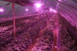 El ángulo 9W LED del resplandor de 360 grados crece la bombilla