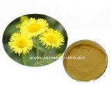 純粋で自然なフラボン10%、風熱を扱うピレトリン50%の菊のMorifoliumのエキス熱および頭痛