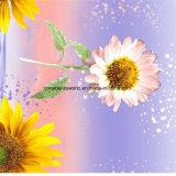 [100بولستر] غروب دوّار شمس [بيغمنت&ديسبرس] يطبع بناء لأنّ [بدّينغ] مجموعة