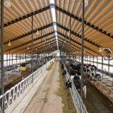 Preiswertes Stahlrahmen-Kuh-Halle-Gebäude für Verkauf
