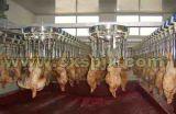 Halalの家禽の虐殺装置の高品質