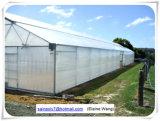 Casa verde hidropónica comercial de película plástica dos sistemas para o tomate