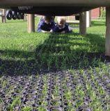 Stuoie vuote di gomma del pavimento della cucina dell'erba
