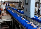 Machines d'évaluation de poids de dérivés de volaille