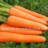 Моркови 10kgs обрабатывая фабрики Китая Xiamen свежие помытые в коробке