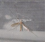 Écrans invisibles de guichet d'Anti-Insecte de fibre de verre
