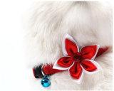 Collier coloré de chat de produits d'animal familier (C011)