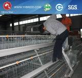 Клетка цыпленка слоя низкой цены для птицеферм (A3L90)