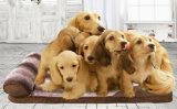 애완 동물 제품 큰 개 안락 침대 (B005)