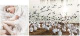 Volledige 233t Katoenen Witte Gans onderaan Dekbed voor Chrildren