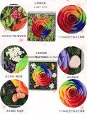 여자 친구 발렌타인 데이 어머니날 휴일에 보존한 꽃 장식적인 로즈 가정 훈장 선물 무지개의 사랑