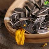 Zaden van de Zonnebloem van Cinese 5009 met Uitstekende kwaliteit aan Eygpt