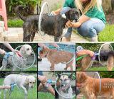 360 Schoonmakende Producten 360 van de Hond van de Producten van de Hond van het Huisdier van de Levering van het Huisdier van de Douche van het Bad van de graad Ringvormige Hoofd Schoonmakende de Wasmachine van de Hond