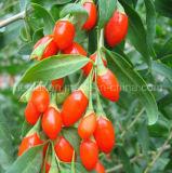 Cinese Wolfberry del Ningxia Goji della nespola