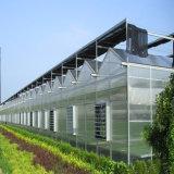 野菜のための高品質そして好ましい価格のパソコンの温室