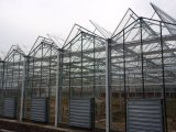 China-Lieferanten-niedrige Kosten-Glasgewächshaus für Commercialof Fabrik-direkten Preis