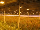 High Pressure Sodium Lamp 100W 150W Plant Growing Lamp