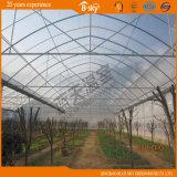 Hydroponics Tomato를 위한 Frame 알루미늄 Polycarbonate Sheet 정원 Greenhouse