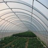 Invernadero neto transparente del jardín de la película plástica/del insecto del bajo costo para la flor