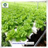 Hydroponic 시스템을%s 가진 꽃을%s 명반 강철 프레임 유리제 온실