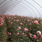 꽃을%s 도매 저가 꽃 천막/소형 온실